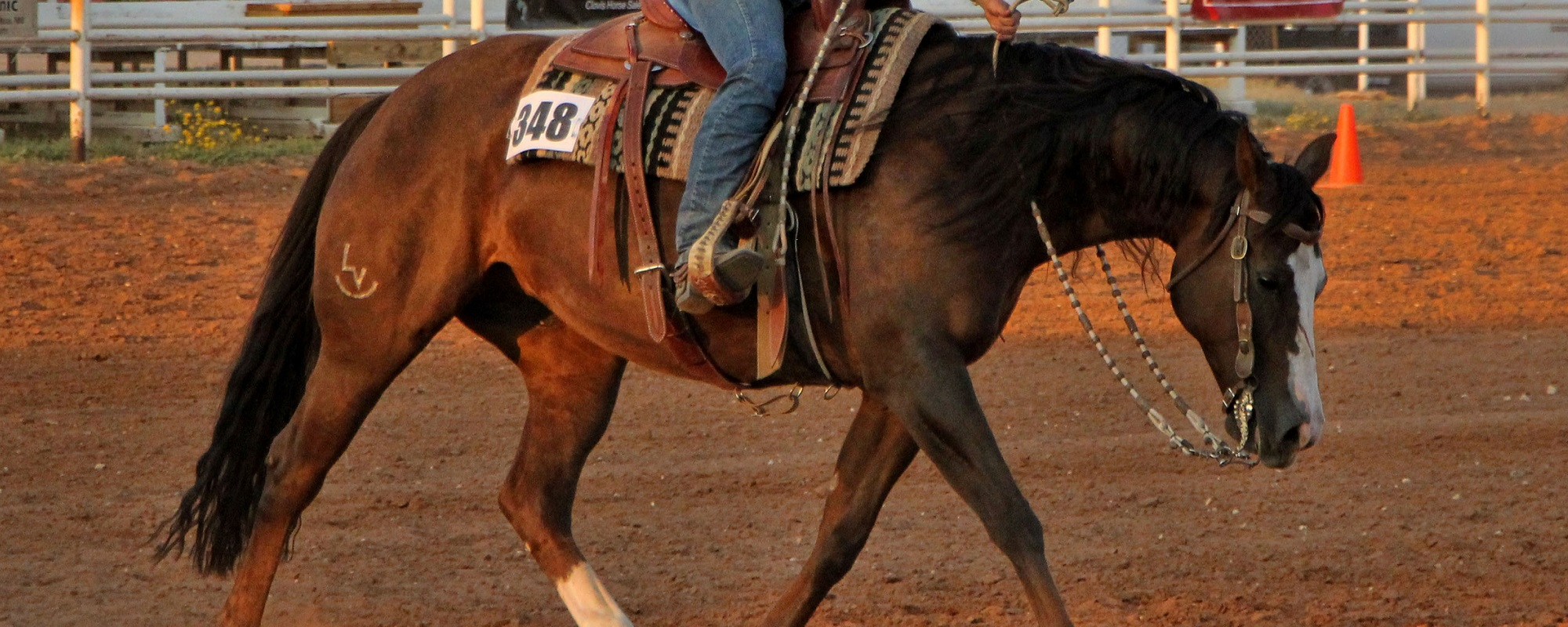 Australian Ranch Horse Is A National Body Who Promotes Ranch Horses